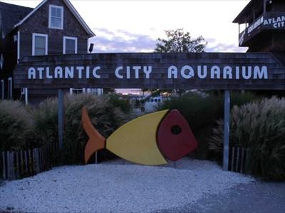 Atlantic City Aquarium Atlantic City Nj Public