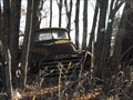 Image for 1951 GMC 100 Pickup Gets Back To Nature