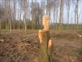 Image for Owl - Vragender - the Netherlands