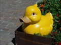 Image for Yellow Rubber Duck - Überlingen, Germany, BW