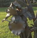 Image for Judy's Iris - Edmond, OK
