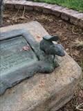 Image for Squirrel - Phoenix, AZ