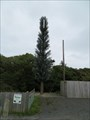 Image for Pine Tree - Kirk Michael, Isle of Man