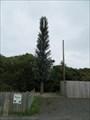 Image for Pine Tree - Kirk Michael, Isle of Man