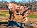 Image for Bengal Tiger - Waco, TX