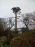Image for Mobile Tree - A487 lay-by, Y Felinheli, Gwynedd, Wales