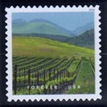 Image for Vineyard, Edna Valley, California