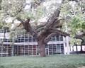 Image for Hanging Tree - Houston, TX