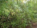 Image for Mountain Lakes Blueberry Patch