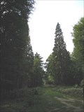 Image for Giant Sequoia - Tall Trees Trail, Rhinefield, New Forest, South Hampshire, UK