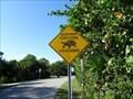 Image for Gopher Tortoise Crossing - Sanibel Island, Florida, USA