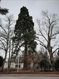 Image for Mammutbaum Pestalozzi-Schule - Brühl, NRW, Germany