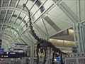 Image for Brachiosaurus Dinosaur at OHare Airport