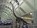 Image for Brachiosaurus Dinosaur at OHare Airport