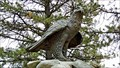 Image for Peregrine Falcon - Osoyoos, British Columbia