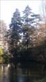 Image for Séquoia toujours vert du jardin botanique - Tours, Centre