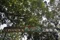 Image for Cohanzick Zoo Bridgeton NJ