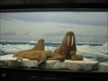 Image for Walruses - The Natural History Museum of LA County, CA ~ North America