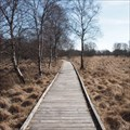 Image for Boardwalk at moor lake near Aurich, Germany