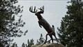Image for Blacktail Deer - Osoyoos, British Columbia
