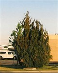 Image for MADD Memorial Tree - Clovis, NM