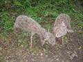 Image for Deer - Grand Union Canal Walk, Stoke Bruerne, Northamptonshire, UK