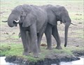 Image for Chobe National Park - Kasane, Botswana