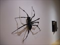 Image for Spider  -  Palm Springs, CA