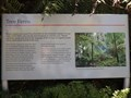 Image for Tree Ferns - Mt Tomah Botanic Gardens, NSW, Australia