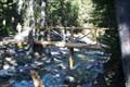 Image for Baring Falls Footbridge - Glacier National Park