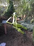 Image for Praying Mantis  -  Encinitas, CA