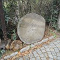 Image for Tree Growth Ring (Lipka) - Brno, Czech Republic