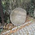 Image for Tree Growth Ring (Lipka) - Brno, Czech Republic