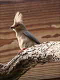Image for Dan Moran Aviary - OKC Zoo - Oklahoma City, OK