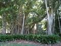 Image for Ringling Banyan Tree - Sarasota, FL