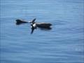 Image for Monterey Bay National Marine Sanctuary  -  Monterey, CA