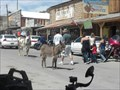 Image for The Burros of Oatman, AZ