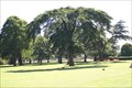 Image for Abbey Park Tree