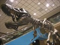 Image for T. Rex Bones - Pittsburgh International Airport, Moon Twp, PA