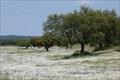 Image for Wild White flower field - Vidigueira