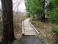 Image for Bog Trail Boardwalk - Black Moshannon State Park, Philipsburg, Pennsylvania