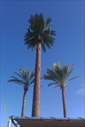 Image for Talking Tree - Linda Vista & Hartman - Tucson, AZ