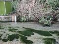 Image for Upwey Wishing Well Water Gardens - Dorset