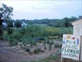 Image for Pick Your Own Flower Garden  -  Lincoln, MA
