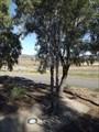 Image for Shunter - Werris Creek, NSW, Australia