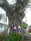 Image for Moreton Bay Fig Tree - Russell, Northland, New Zealand