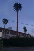 Image for Talking Tree - 1st & River - Tucson, AZ