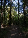 The path through through the woods.