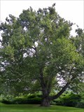 Image for Pinchot Sycamore - Simsbury, CT