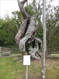 Image for The Aldworth Yew - St Mary's Church, Aldworth, Berkshire, UK